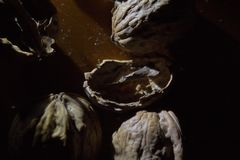Close up of a bunch of walnuts and empty shells on a wooden table illuminated by single light source stock images