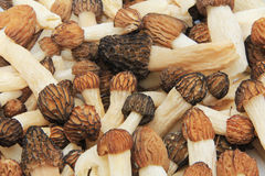Close-up of a Bunch of Wild Morel Mushrooms Stock Photos