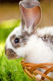Close-up of bunny, easter and holidays Royalty Free Stock Photos