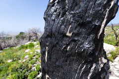 Burnt Tree Trunk in the Wild Royalty Free Stock Photos
