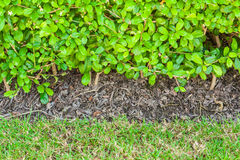 Close up bush and grass texture, background Stock Photography
