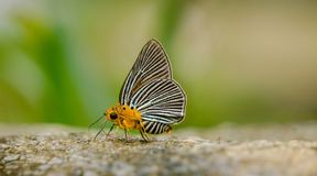 Close-up butterfly Royalty Free Stock Photos