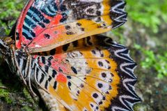 Close up butterfly Royalty Free Stock Photography