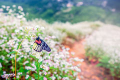 Close up butterfly on flower Royalty Free Stock Image