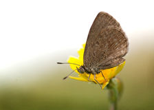 Close-up of a butterfly on a flower Stock Photos