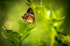 A close up of a butterfly in the green