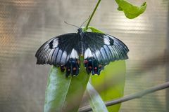 Close up of butterfly on a leaf stock image