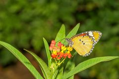 Close up butterfly in nature at park. Flower, colorful, monarch, natural, flowers, beautiful, garden, insect, butterflies, green, spring, floral, orange royalty free stock photos