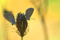 Close up with butterfly Royalty Free Stock Photography