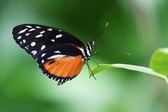 Close-up of Butterfly on Plant Stock Photos