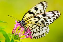 Close-up of Butterfly Pollinating Flower Stock Photos