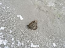 Close-up of a butterfly on the salt surface of a dried lake royalty free stock image