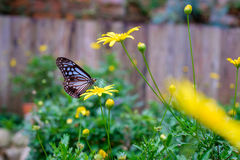 Close up of butterfly seeking nectar on a flower. In garden Stock Image