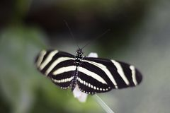 Close up of Butterfly sitting on blade of grass stock images