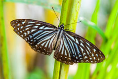 Close-up of butterfly sitting on green leaf Royalty Free Stock Photo