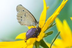 Butterfly sitting on a yellow flower, macro shot royalty free stock photos