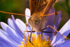Close-up of butterfly on a violet and yellos flower macrophotogr stock photo