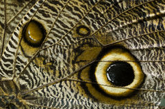 Close up of butterfly wing Royalty Free Stock Photography