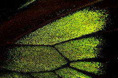 Close-up of butterfly wing Royalty Free Stock Image