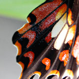 Close up of butterfly wing Stock Photos