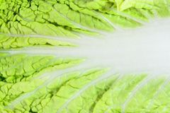 Close-up of cabbage leaf Royalty Free Stock Photos