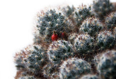 Close-up of cactus Royalty Free Stock Image