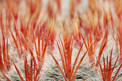 Close up of an cactus Stock Photo