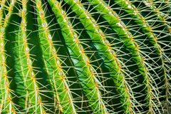 Close-up cactus Royalty Free Stock Photography