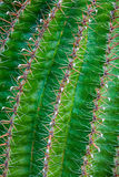 Close-up cactus Stock Photos