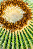 Close-up cactus Stock Photo
