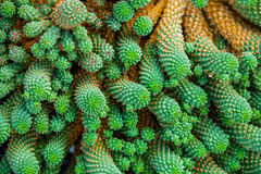 Close-up cactus Royalty Free Stock Images