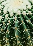 Close up of cactus. Stock Images