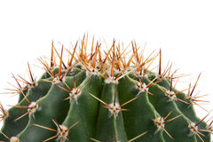 Close-up cactus Stock Images