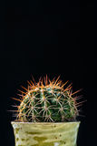 Close up cactus on black background Stock Photos