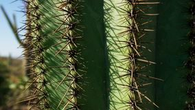 Close up of cactus cacti in hot desert with spines and thorns stock image