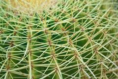 Close up of a cactus : Coryphantha Stock Photos