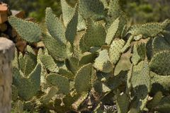 Cactus Close Up. Close up of a cactus in the desert royalty free stock photo