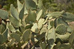 Cactus Close Up. Close up of a cactus in the desert stock photography