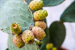 Close up of cactus fruit Stock Photography