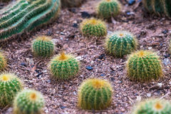 Close up Cactus Stock Images