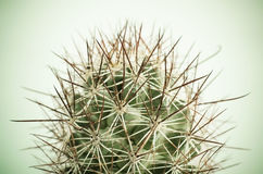 Close up of Cactus. Close up of globe shaped cactus with long thorns. Shallow depth of field.Processed with vintage style royalty free stock photography