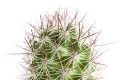 Close up of Cactus Royalty Free Stock Photo