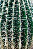 Close-up of cactus royalty free stock images