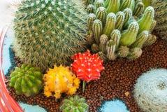 Close-up Cactus Royalty Free Stock Photos