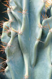 Close up of a cactus plant Royalty Free Stock Photo