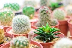 Close up cactus Stock Photography