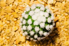Close up cactus plants in pots selling at night market,. Top view stock images