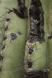 Close up on Cactus stock photography