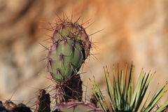Close up of cactus spines stock photography