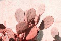 cactus toned in living coral stock image